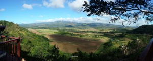 A panorama of the sugarcane fields